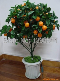 40 /Bag Bonsai Orange Tree Seeds Organic Fruit Tree Seeds For flower pot planters very big and delicious(China (Mainland))