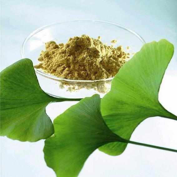 Ginkgo Biloba Extract 500g Anti-aging enhance memory Powder
