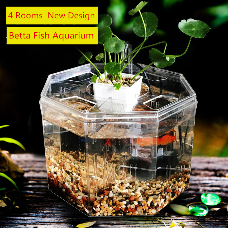 Online buy wholesale betta bowls from china betta bowls for Betta fish tank size