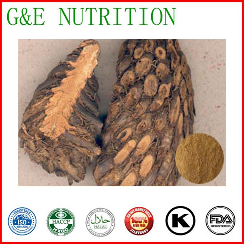GMP factory supply Natural herb Cyrtomium Rhizome extract 1000g