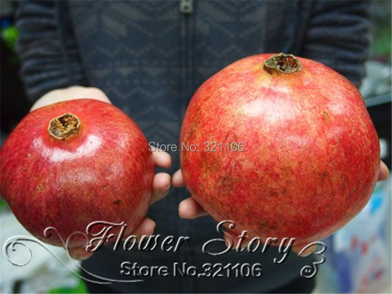 20 pcs bag Giant Pomegranate seeds home plant Delicious fruit seeds very big and sweet for