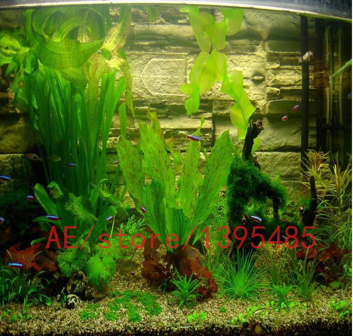 Online kopen wholesale waterplant zaden uit china for Cheap pond plants