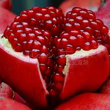 20 pcs/bag Giant Pomegranate seeds home plant Delicious fruit seeds very big and sweet for home garden plant(China (Mainland))