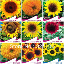 10 different varieties of Sunflower seeds ,bonsai flowers ,four seasons garden courtyard,about 150seeds+(China (Mainland))