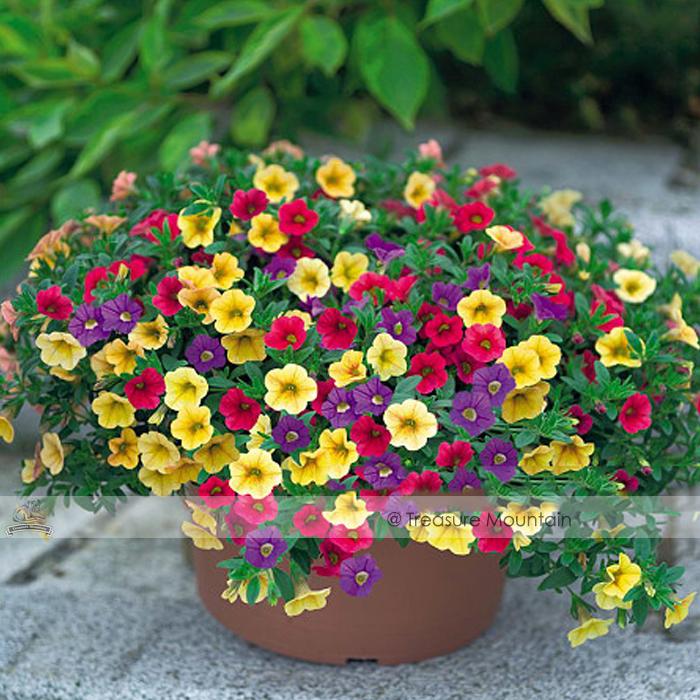 1 Professional Pack, 200 seeds / pack, Mix Garden Petunia Shuttlecock Flower Horn Bonsai Flower Seed #NF395(China (Mainland))