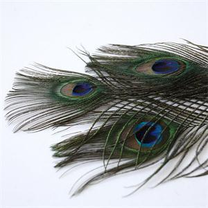 2014 New 10 PCS Natural Peacock Sword Feathers Brand Beautiful Peacock Tail Feathers DIY Decoration(China (Mainland))