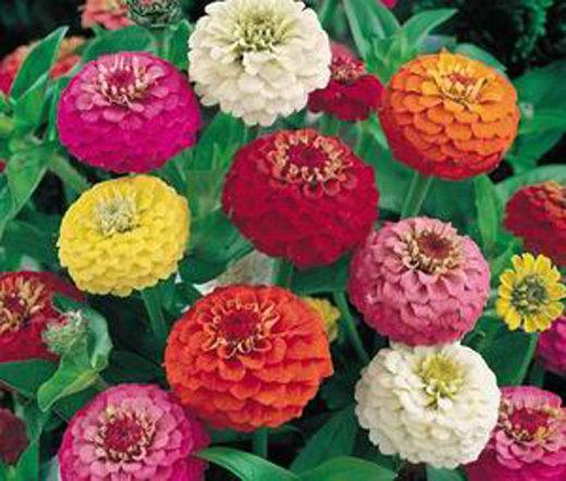 цены на Карликовое дерево Leean 2015 100 LILIPUT Elegans Flower Seeds в интернет-магазинах