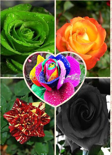 200PCS mix color bonsai seeds Flower seeds rose Seeds, sementes de flores for casa e jardim semillas de plantas(China (Mainland))