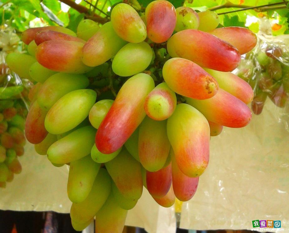 На даче фруктовый сад виноград цветы на 6ти сотках
