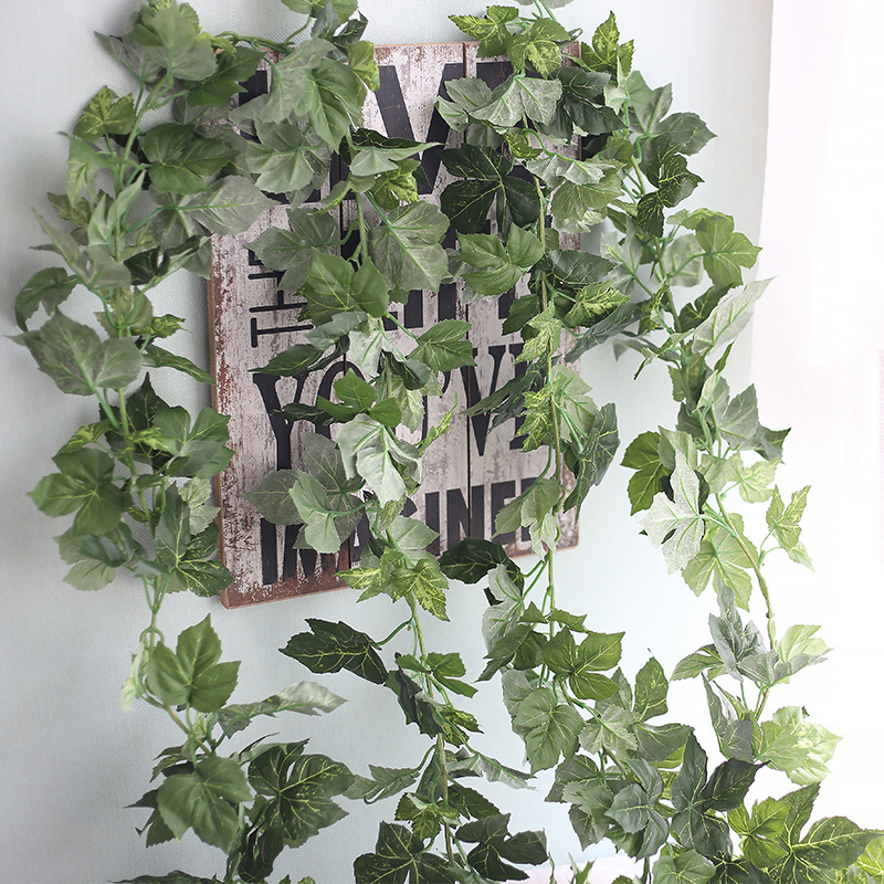 온라인 구매 도매 실내 포도 나무 공장 중국에서 실내 포도 나무 ...