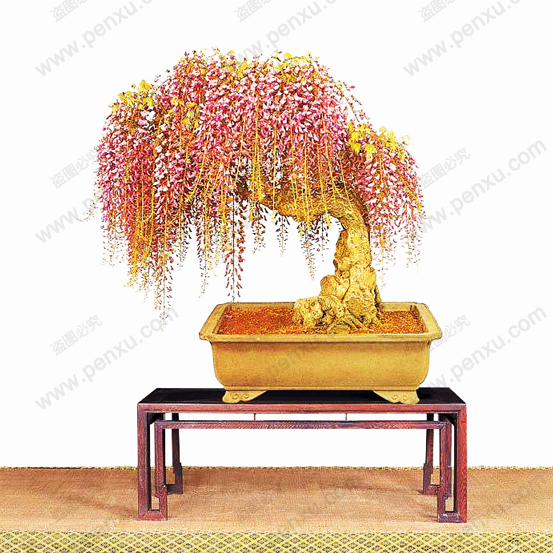 10PC rare gold mini bonsai wisteria tree seeds Indoor ornamental plants planting wisteria seeds