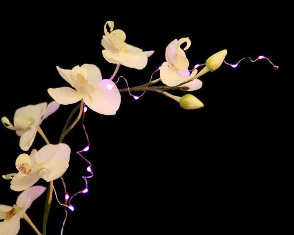 LED-String-light-D.jpg