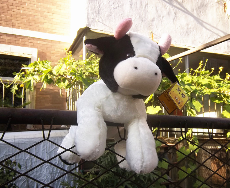 high quality little cow plush toy soft Dairy cow soft doll birthday gift b4883(China (Mainland))