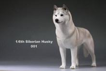 Em estoque 6 cores 1:6 acessórios siberian husky simulação animais décimo sexto cão figura modelo brinquedos para 12 figure figure figura de ação(China)