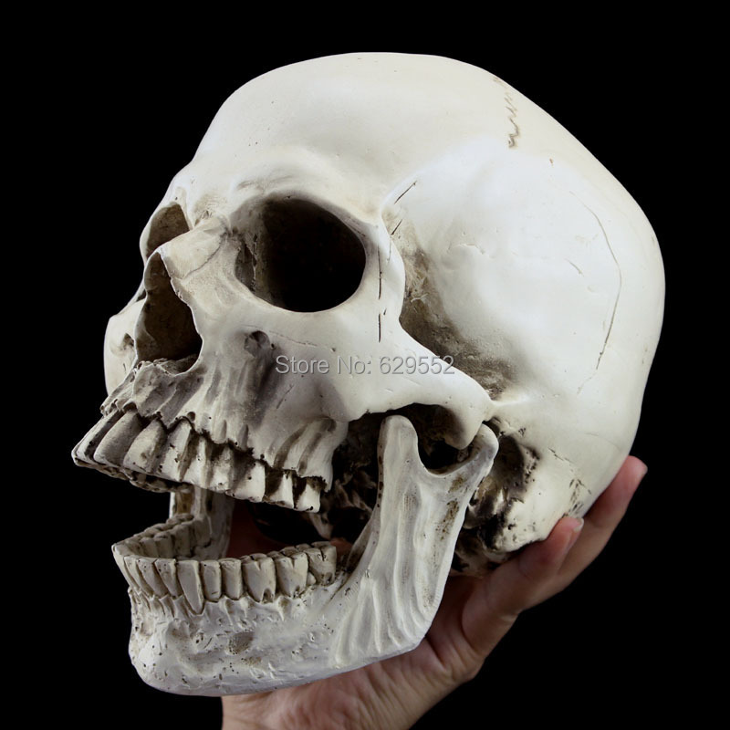 Halloween decoration props realistic one than a human skull terror resin skull Kito 1.2kg()