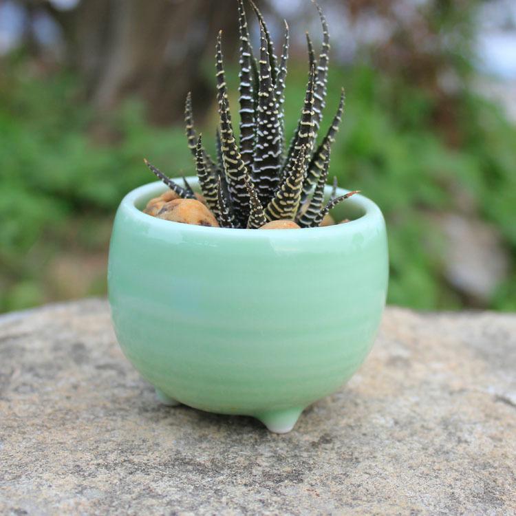 Celadon Planter Ceramic Flowerpot On Sale Cute Succulent