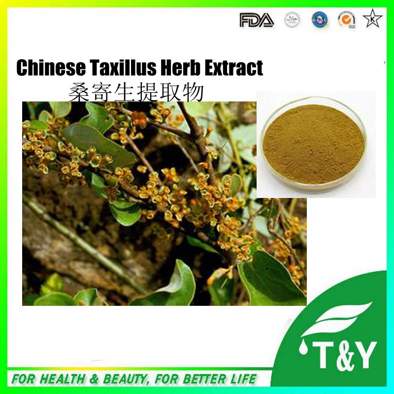 100% Natural chinese taxillus herb extract, Taxillus chinensis Extract Powder 10:1 500g/lot