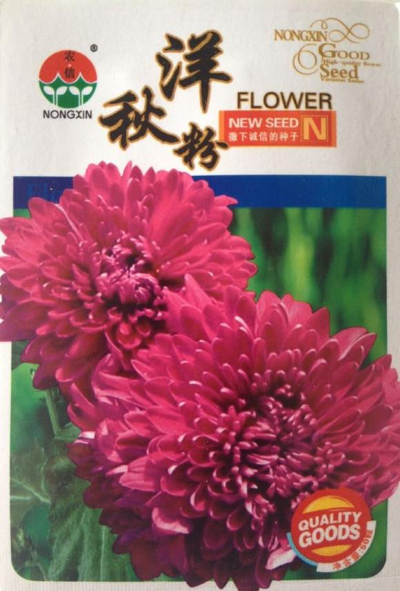 50 pçs/saco flor grande Dia 8 – 10 cm rosa outono crisântemo sementes fácil crescer Rare Bonsai sementes de flores