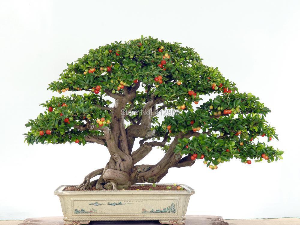 Buy Upscale Indoor Plants Need Fruit