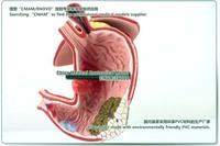 Товары для изучения медицины cmam] ,  CMAM-Digestive Models 13