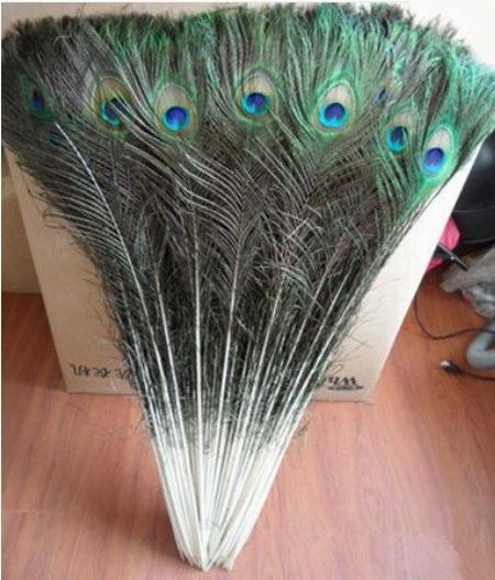 Free shipping 50 PCS beautiful natural peacock feathers eyes 90-100CM For Christmas, wedding decoration, DIY(China (Mainland))