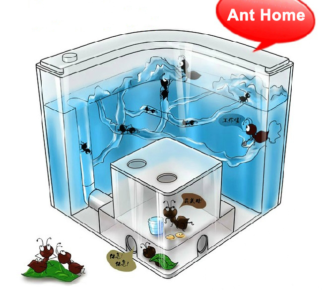 how to end ants at home