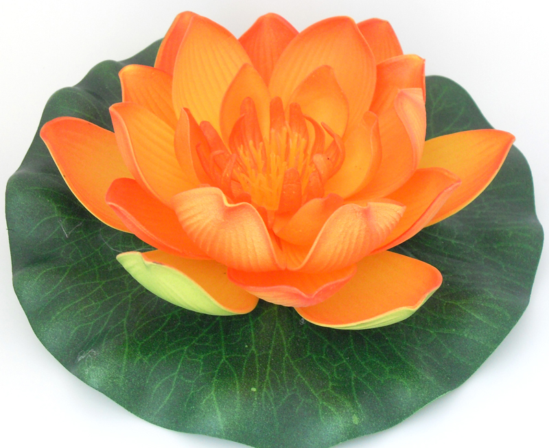 Orange Lotus Flower | www.imgkid.com - The Image Kid Has It!