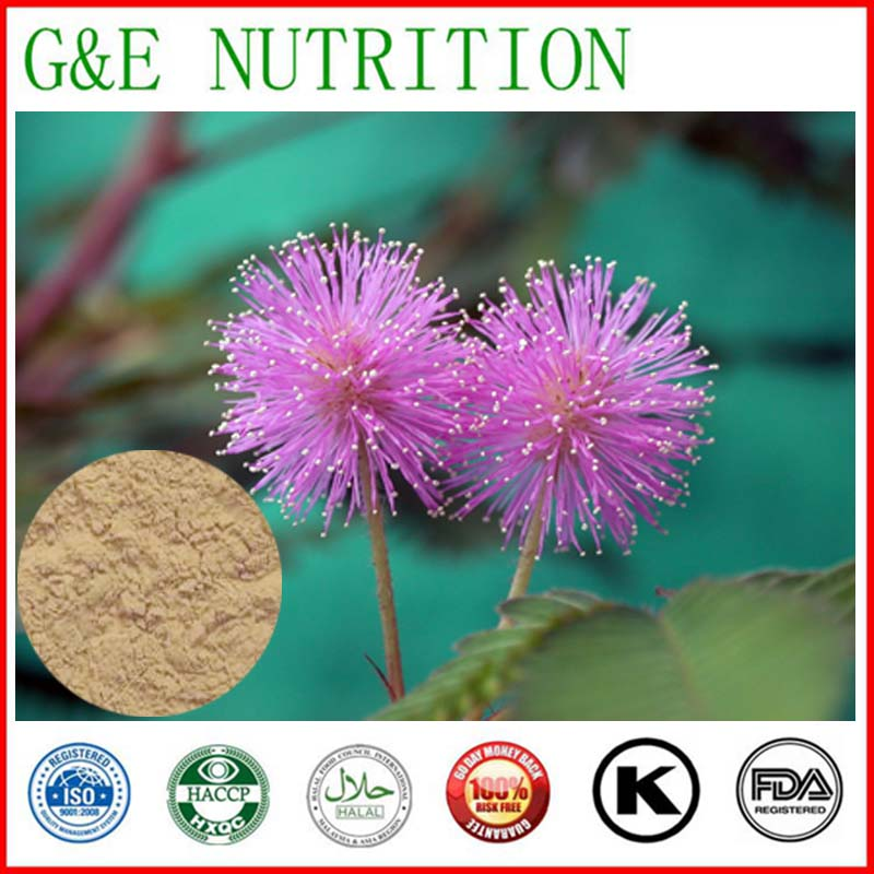 Natural Herb Mimosa Pudica Extract 700g