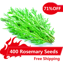 400 Rosemary Seeds DIY Garden Plant Easy To Grow Herb, vegetable seeds healthy,Free Shipping(China (Mainland))