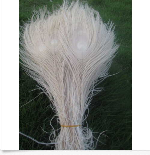 Free shipping wholesale high quality 10pcs Rare beige natural peacock feather 25-30cm / 10-12inch decorative diy(China (Mainland))