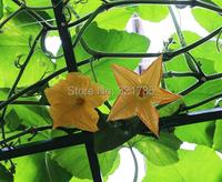 Карликовое дерево Flower Goddess 3 /1 8 Cucurbita Cushaw B096 B096*3