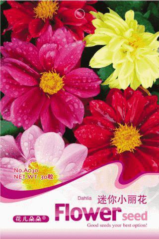 Mix Colors Mini Dahlia Seeds, 30pcs/bag, Seeds Bonsai, Flower Seeds Perennial, Beautiful Dahlia, Garden Flowers Free Shipping(China (Mainland))