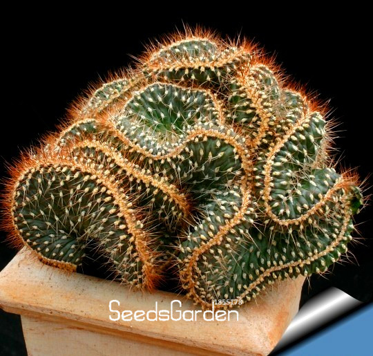 Compra diy cactus online al por mayor de china mayoristas for Cactus enanos por mayor
