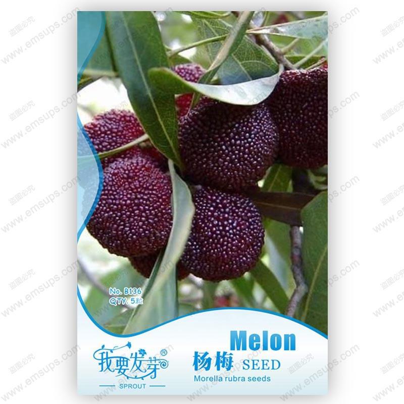 Original packaging myrica rubra seeds red bayberry seeds perennial arbutus taste sweet fruit tree seeds 5