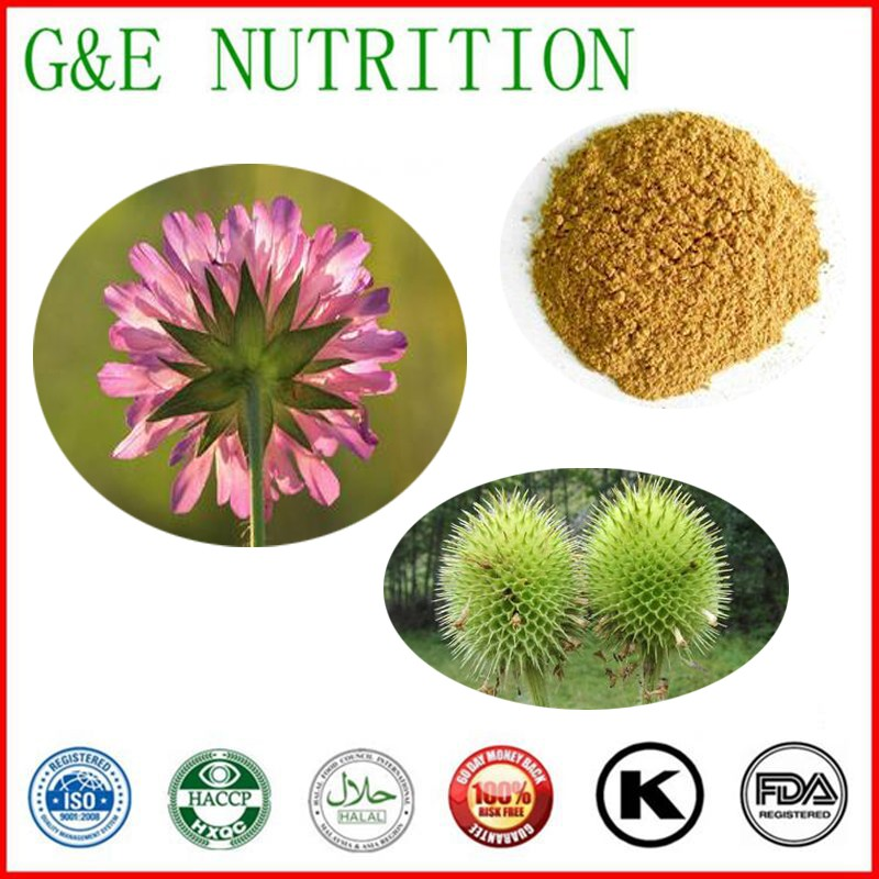 700g Lowest price Teasel/ teasle/ teazel/ Dipsacus asper/ Dipsacus asperoides/ Radix Dipsaci Extract with free shipping