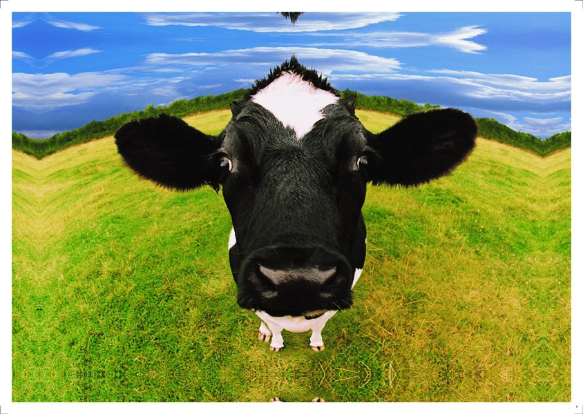 2015 hot Free shipping home decor wall art Decorative oil painting Lovely cow blue sky and prairie printed on canvas no frame(China (Mainland))