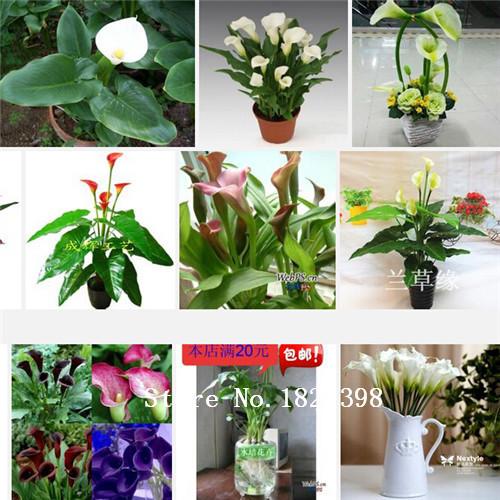 Acheter plantes en soie promotion achetez des acheter for Acheter plante