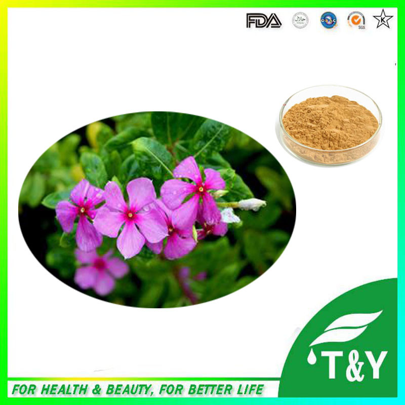 Periwinkle Extract/periwinkle extract powder/madagascar periwinkle herb extract 700g/lot