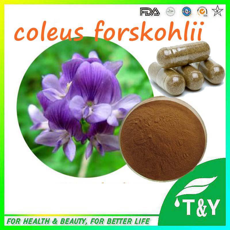 Coleus Forskohlii Extract Forskolin Capsules 500mg*800pcs