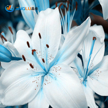 50 Pcs / Bag Plants Potted Lily Flower Seeds Flower Seeds Lily Perfume Purify Indoor Bonsai Air Mixing Colors