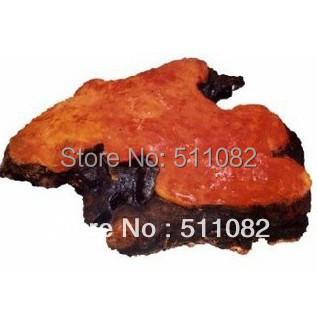 200gram 100% Natural Antrodia Cinamomea Extract Powder 30% Polysaccharide<br><br>Aliexpress