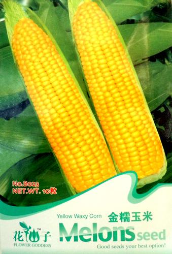 شمعي الذرة الصفراء الذهبية 10 من السهل أن تنمو بذور الإرث b023 الشحن مجانا(China (Mainland))