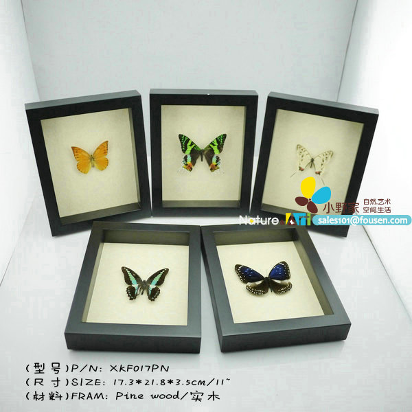 FOUSEN Nature&Art solid wood True butterfly specimens(China (Mainland))
