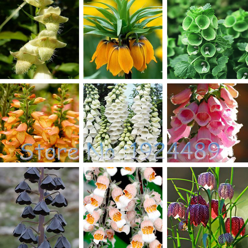 Beautiful 24 different color styles Fritillaria foxglove Digitalis potted bonsai garden seeds DIY home garden 100PCS(China (Mainland))