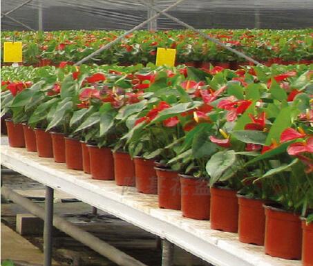 Compre potes pl sticos para plantas vasos for Plantas decorativas de plastico