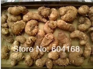 Lobedfruit SchizocapsaRhizome / paddy seven/shui tian qi/ Traditional Dry Herbs Traditional Chinese medicine 500 G Free Shipping<br><br>Aliexpress
