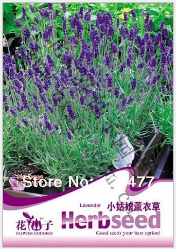 Aromatic plants Little girl Lavender,Little girl Lavender seeds, Aromatic plants seeds,about 20 particles(China (Mainland))