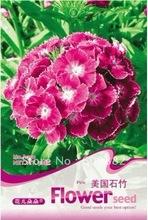 pink seeds promotion