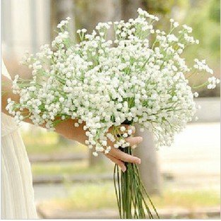 Gypsophila paniculata seeds white pure miss flower 4 Original Pack - CelineBridal Dresses 2 store