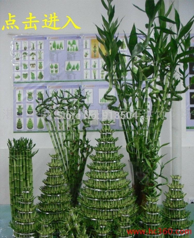 2015 rare 50 pcs 11 sortes de graines de bambou de la chance anti rayonnement absorber poussi re. Black Bedroom Furniture Sets. Home Design Ideas